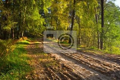 Stezka v lese na podzim