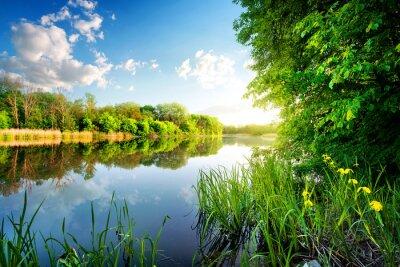 Obraz Stromy podle klidné řeky