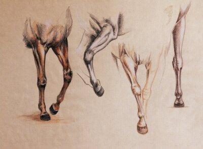 Obraz Studie koňské nohy