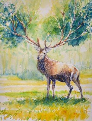Obraz Summer.Red jelen s velkými rohy, na jejichž růst leaves.Picture vytvořené s akvarely.