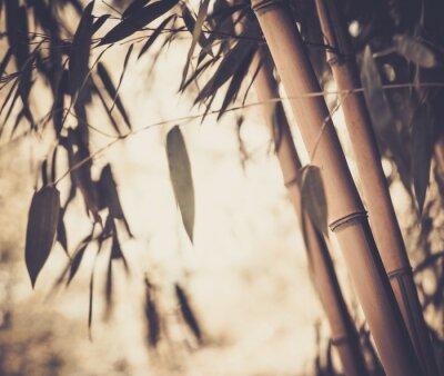 Obraz Tónovaný obraz bambusové rostliny