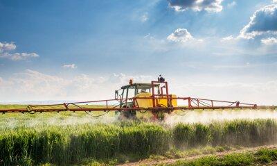 Obraz Traktor stříkání pšeničném poli