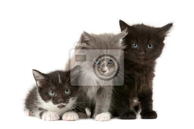 Tree nadýchané koťata