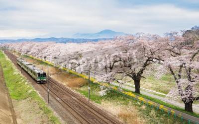 Obraz Třešňové květy nebo Sakura a místní vlak