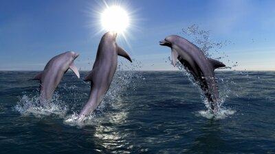 Obraz Tři delfíni