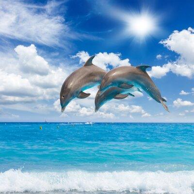 Obraz Tři skákání delfíni