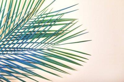 Obraz Tropické listy na pastelově růžovém pozadí.