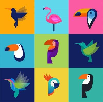 Obraz Tropické ptáci - sada vektorových ikon
