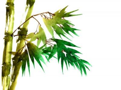 Obraz Tropický bambus s listy