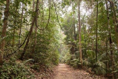Obraz Tropický deštný prales