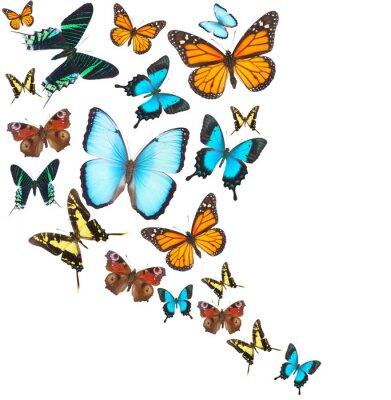 Obraz Tropických motýlů set