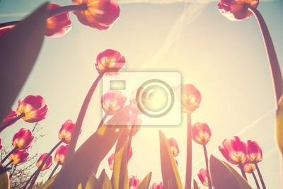 Obraz Tulipán květiny