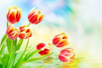 Obraz Tulipán květiny zblízka