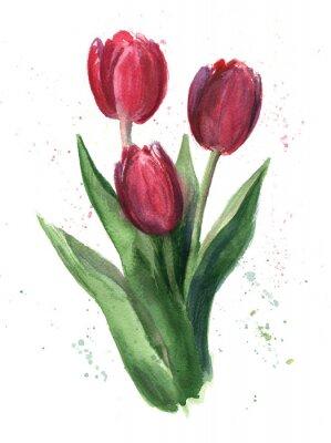 Obraz Tulipány, akvarel