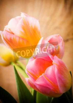 Obraz Tulipány, květinové pozadí.