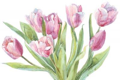 Obraz Tulipány kytice akvarel ilustrační