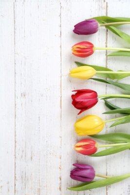 Obraz tulipány pozadí