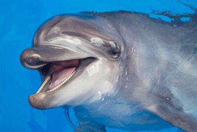 Obraz Usmívající se Dolphin