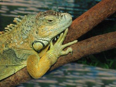 Obraz V čele ještěrka zelená na stromě