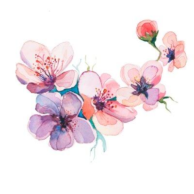 Obraz V jarní květiny Akvarely izolovaných na bílém pozadí