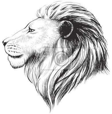 Vektorove Lvi Hlava Ilustrace Rucne Kreslenymi Profil Lvi Obrazy