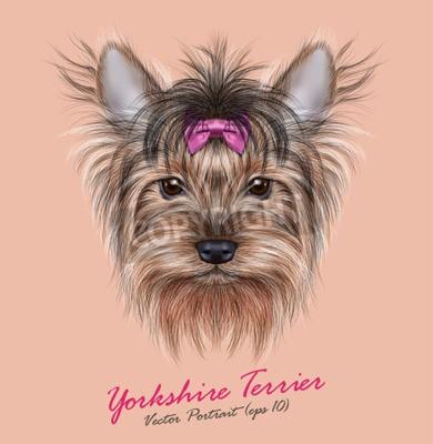 Obraz Vektorové Portrét psa domácího. Roztomilý hlava jorkšírský teriér na ping pozadí.