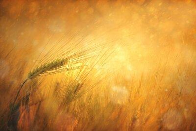 Obraz Venkov slunečné Wheatfield fantasy pozadí