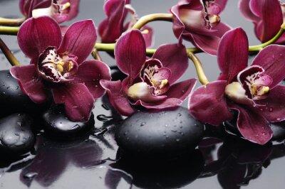 Obraz větev červená orchidej s léčbou kameny
