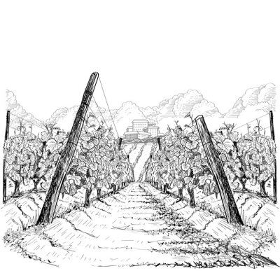 Obraz Vineyard landscape with clouds and building on the hill. Hand drawn sketch vector illustration on white