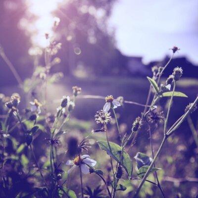 Obraz vintage foto flowre