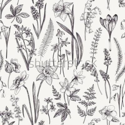 Obraz Vintage květinový vzor bezešvé. Jarní květiny a byliny. Botanická ilustrace. Narcis, konvalinka, čemeřice, sněženka, šafrán. Rytina. Černý a bílý.