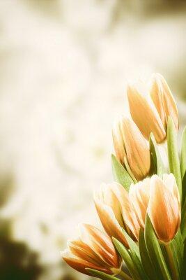 Obraz Vintage Pohlednice s tulipán květiny