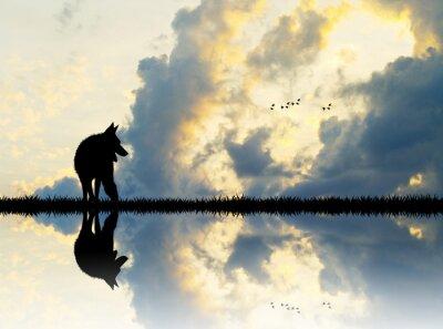 Obraz vlk na řece při západu slunce