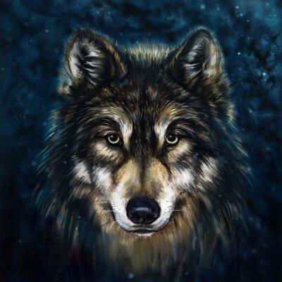Obraz vlk přední