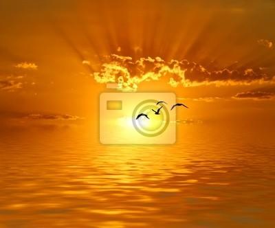 Obraz Volando hacia los rayos de sol