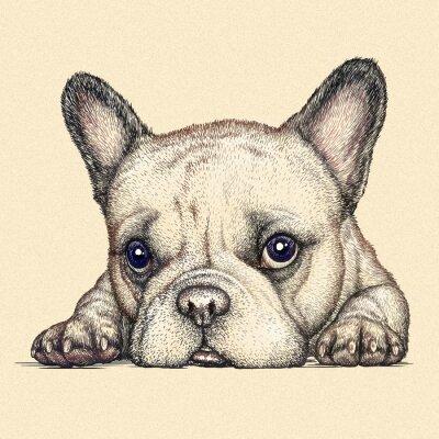 Obraz vyrýt dog ilustrační