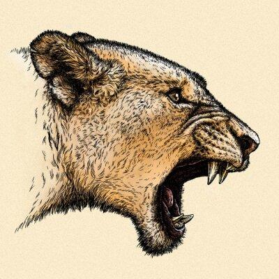 Obraz vyrýt lev ilustrační