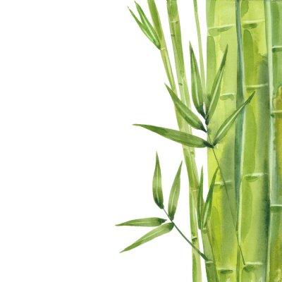 Obraz watercolor bamboo stalks