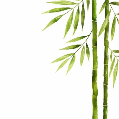 Obraz Watercolor bamboo stem with green leaves and copy space.