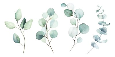 Obraz Watercolor floral illustration set - green leaf branches collection, for wedding stationary, greetings, wallpapers, fashion, background. Eucalyptus, olive, green leaves, etc.