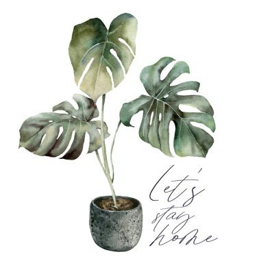 Obraz Watercolor Lets stay home card with monstera. Isolation during an epidemic. Hand painted exotic plant with pot isolated on white background. Floral illustration for design, print or background.