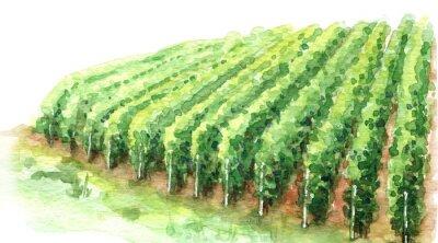 Obraz Watercolor Sketch Rural Scene Fragment of Vineyard