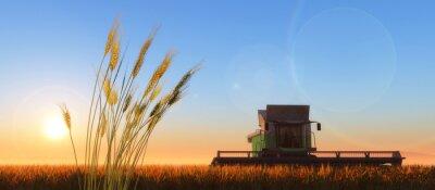 Obraz wheat harvester