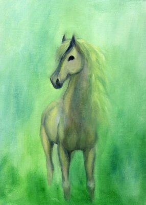 Obraz White Stallion