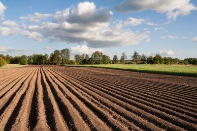 Obraz Widok na zaorane pól w piękny Sloneczny dzien na wsi