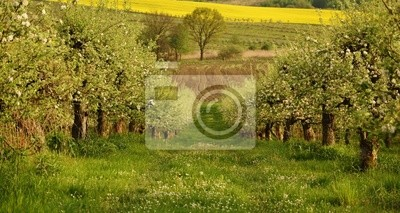 Wiosna w sadzie