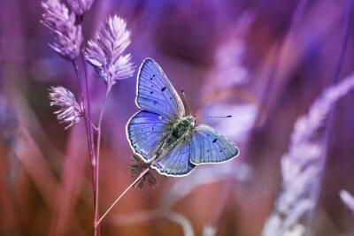 Obraz маленькая бабочка среди травы в сиреневых тонах