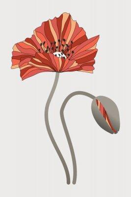 Obraz бутон  и цветок мака с необычными лепестками