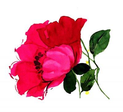 Obraz 아름다운 진홍 의 양귀비
