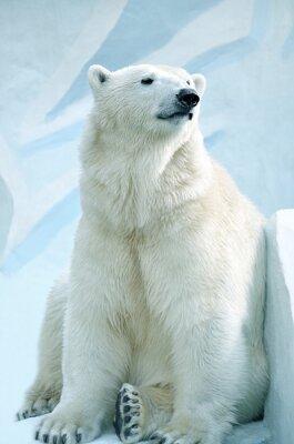 Obraz Полярный медведь.